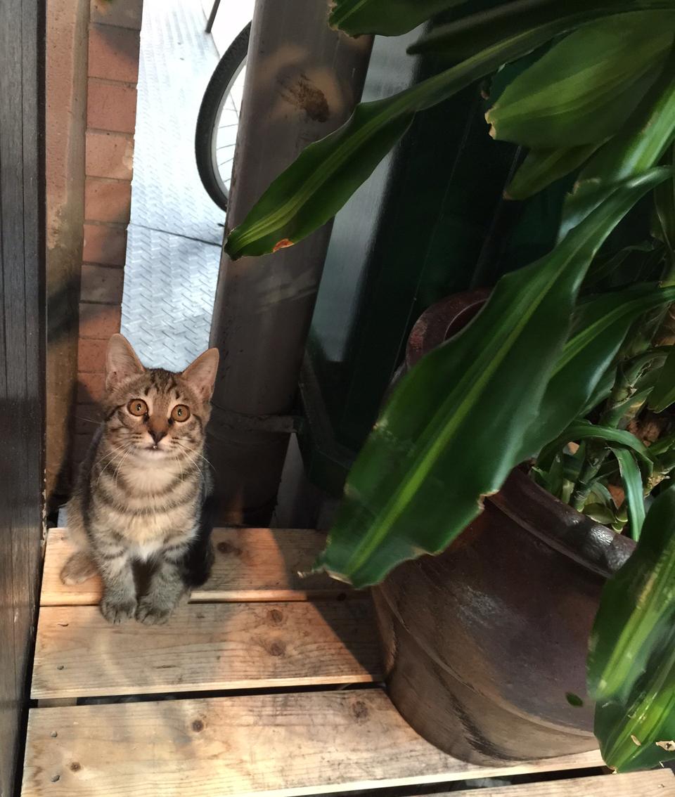 溝に住む猫