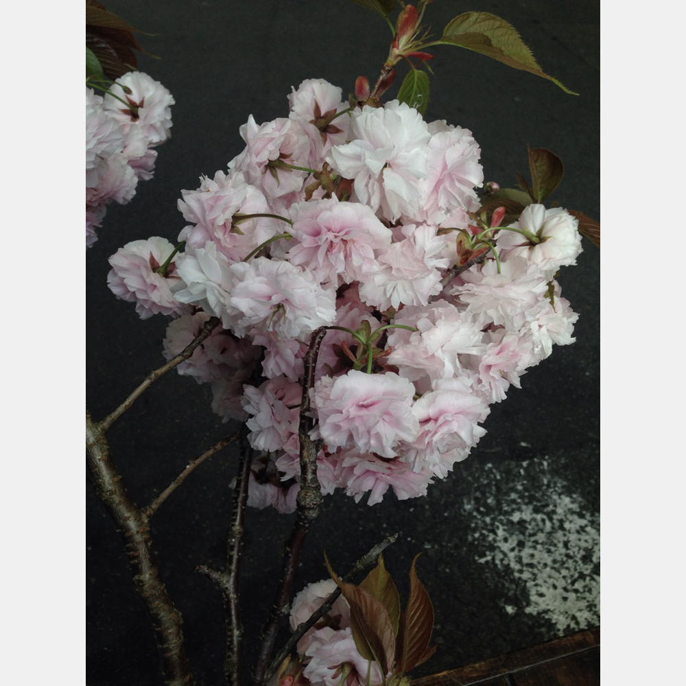 teramachiyamada2016-5 (2)