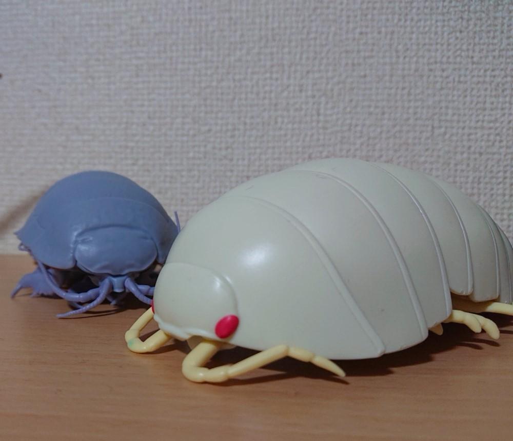 ダンゴムシたち